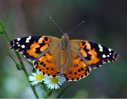 cosmopolite На МКС завелись бабочки