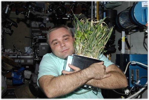 6 Российский космонавт вырастил пшеницу на орбите