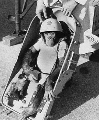02 Топ-10 животных-космонавтов