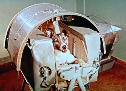 11 Топ-10 животных-космонавтов