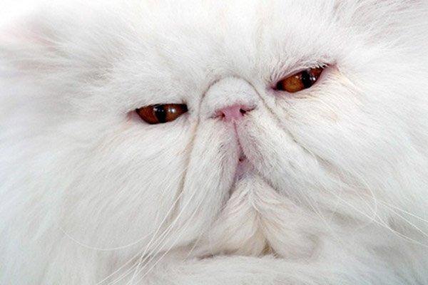 Иран собирается отправить в космос кота